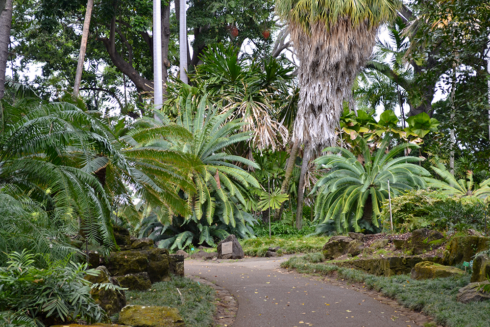 Foster Botanical Gardens A Tranquil Oasis In The Middle Of The City