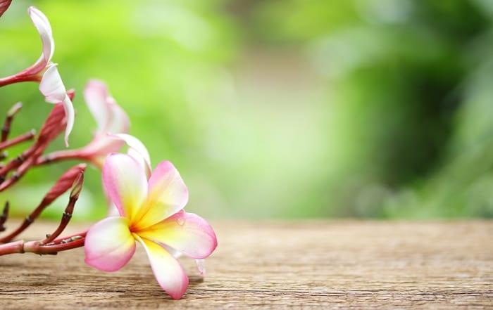 Hawaii's Most Charitable Companies