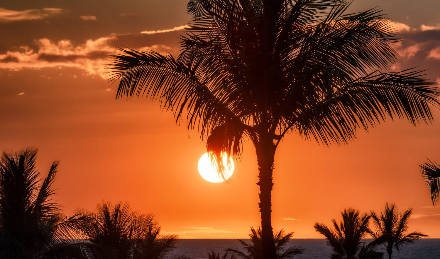 Beautiful sunset with palm tree silhouette against red sky on a tropical beach location