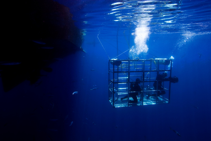 Divers in a shark cage.