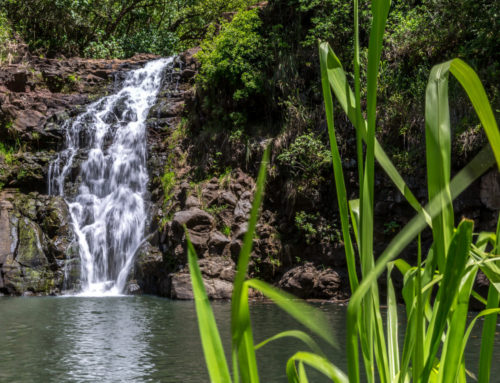 Five of Our Favorite Waterfalls on Oahu