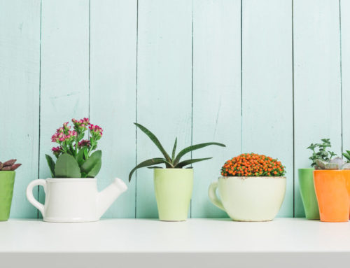 Add Some Greenery to Your Home for Plant Appreciation Day