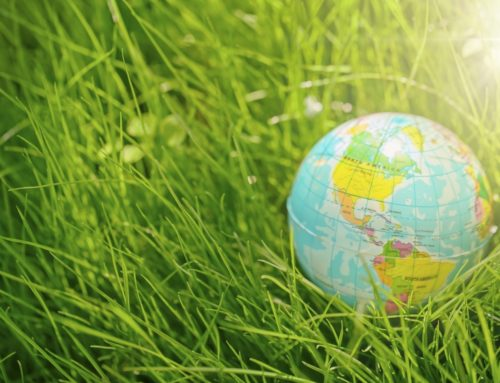 Eleven Easy Ways to Go Green this Earth Day